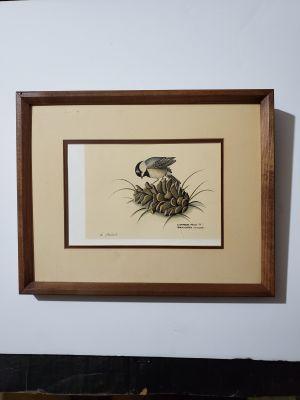 Black-lapped Chickadee 78 - marked Nancy Shumaker Pallan lithograph - Good Condition w/Blemish