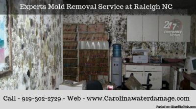 Top Mold Remediation Company Raleigh NC