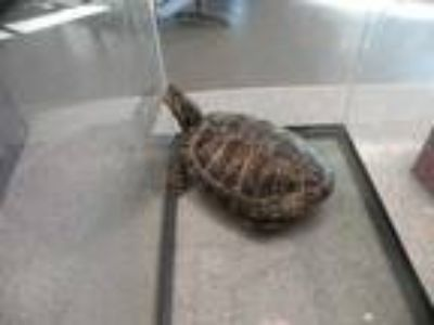 Adopt TACO a Turtle - Other / Mixed reptile, amphibian, and/or fish in Denver