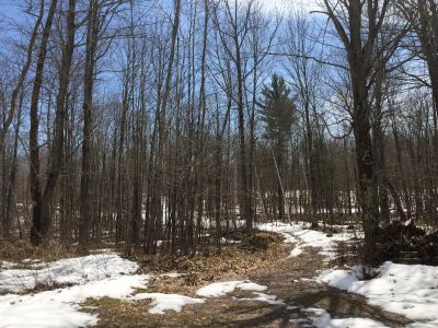 150 Acres Hunting Land Sawyer County, Wi
