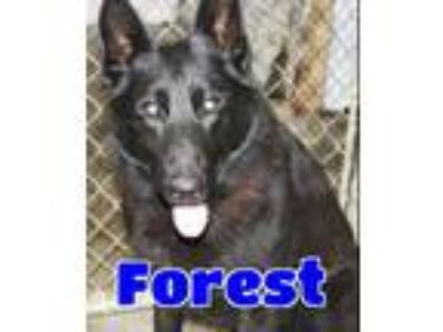 Adopt #110 Forest a Black German Shepherd Dog / Mixed dog in Lawrenceburg