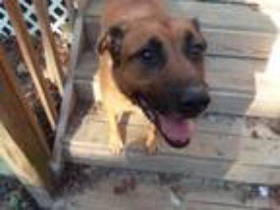 Adopt Prince a Mixed Breed (Medium) dog in Oak Bluffs, MA (25467586)