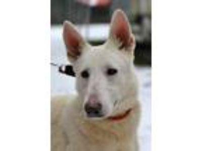 Adopt Leona a German Shepherd Dog