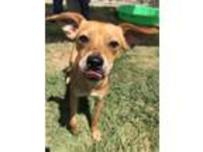 Adopt Samwise a Terrier (Unknown Type, Medium) / Mixed dog in Irving