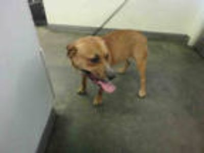 Adopt PENNY a Tan/Yellow/Fawn - with White Mixed Breed (Medium) / Mixed dog in