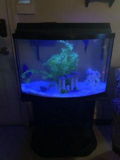 36 Gallon Bowfront with Stand and more!