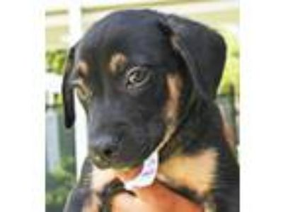 Adopt FOZZIE a Mixed Breed