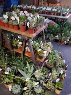 100's of lower than retail succulents and some drought tolerant plants
