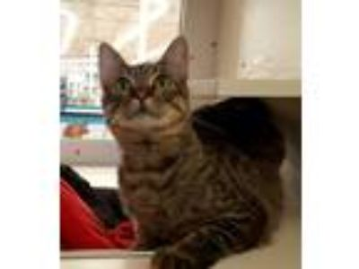 Adopt Fishbone (at PETCO) a Tabby