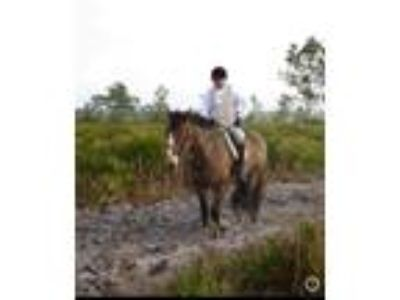 Perfect husband horse or Foxhunter