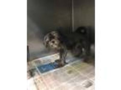 Adopt Bailey a Black Mixed Breed (Small) / Mixed dog in Georgetown