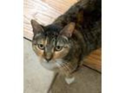 Adopt Lily a Tan or Fawn Tabby Domestic Shorthair cat in Niantic, CT (25296079)