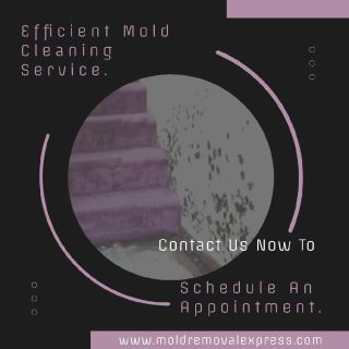 Mold Cleaning Service - Mold Removal Express