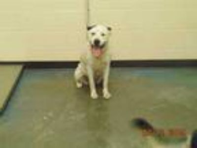 Adopt LUNA a White - with Black Mixed Breed (Medium) / Mixed dog in Memphis