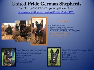 German Shepherd Dog PUPPY FOR SALE ADN-94945 - Beautiful black and tan female GSD available