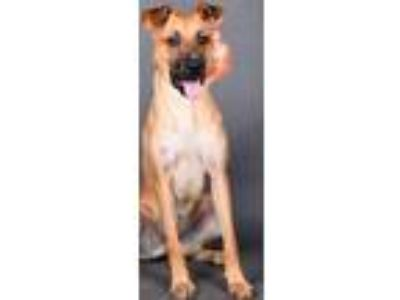 Adopt Sunny a Retriever (Unknown Type) / Mixed dog in Irving, TX (25857106)