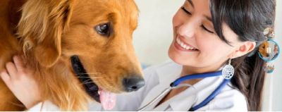 Animal Hospital offers that provide wide range of services to dogs and cats