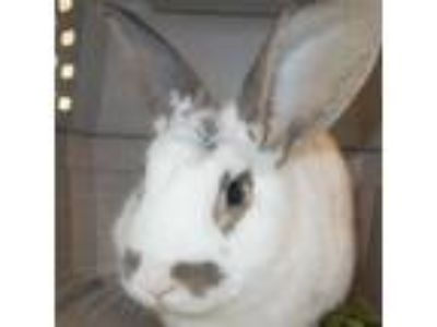 Adopt Travis a Bunny Rabbit