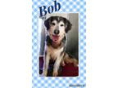Adopt Bob a Retriever, Collie