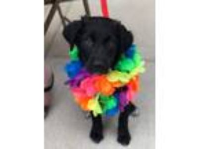 Adopt Raven the puppy a Mixed Breed (Medium) / Mixed dog in Fenton