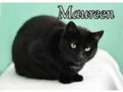 Adopt Maureen a Domestic Short Hair