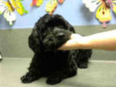 Adopt ROMEO a Black Terrier (Unknown Type, Medium) / Mixed dog in Moreno Valley