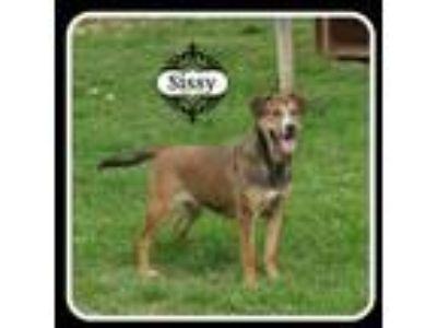Adopt Sissy a Australian Shepherd, Catahoula Leopard Dog
