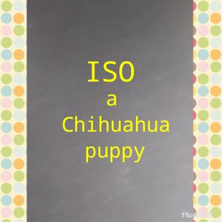 ISO a Chihuahua puppy
