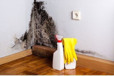 Mold and mildew removal specialist Denver