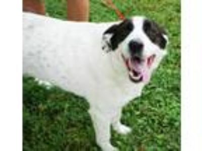 Adopt Ruby (bonded w/ Max) - spons. $85 a Black Border Collie / Great Pyrenees /