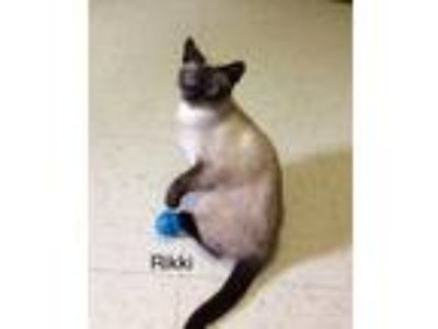 Adopt Rikki a Brown or Chocolate Siamese (short coat) cat in Medway