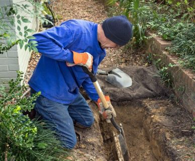 Discover: How Tree Roots Can Harm Your Plumbing Framework