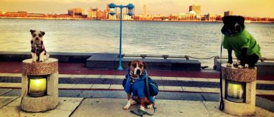 Best dog training : Balanced K-9 Training, LLC