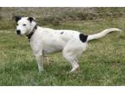 Adopt Andy a Pointer