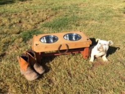 Elevated Dog Bowl Feeder