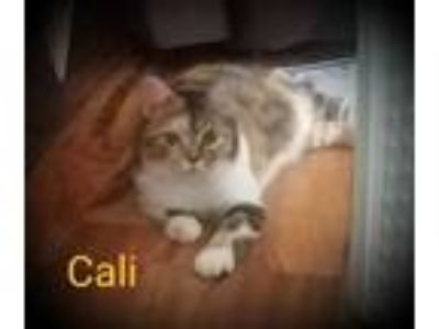 Adopt Cali - Foster Mom's Favorite