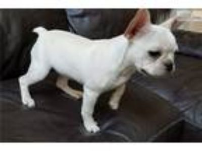 Craigslist Animals And Pets For Adoption Classified Ads In Austin