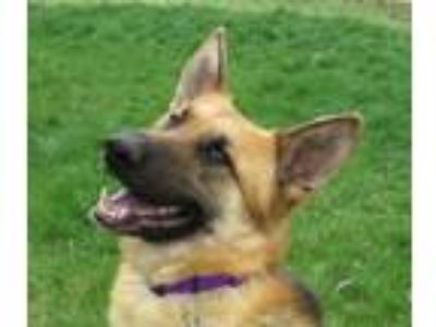 Craigslist Dogs For Adoption Classifieds In Meridian Idaho Claz Org