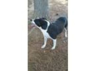 Adopt Tux a Australian Shepherd / Border Collie / Mixed dog in Eddyville