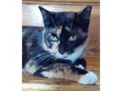 Adopt Sweet Pea a Tortoiseshell Domestic Shorthair / Mixed cat in Lansdowne