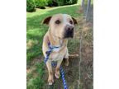Adopt Buck a Mixed Breed (Medium) / Mixed dog in Shelburne, VT (25431700)