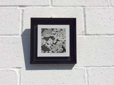 Wall Decor, wall hanging black and white lily pads, 11 x 11