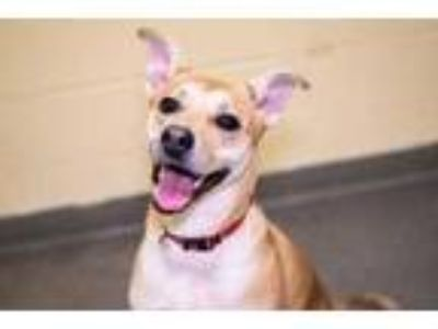 Adopt Sweetie~s19/20-0004 a Tan/Yellow/Fawn Mixed Breed (Medium) / Mixed dog in