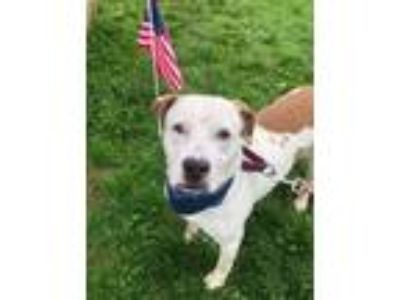 Adopt Terry a Pit Bull Terrier, Mixed Breed