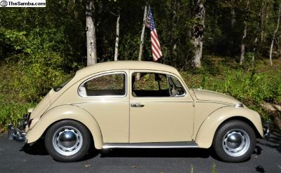 Bug for sale