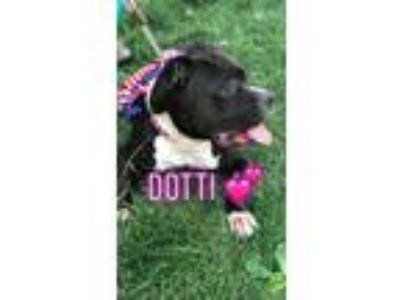 Adopt Dotti a Mixed Breed