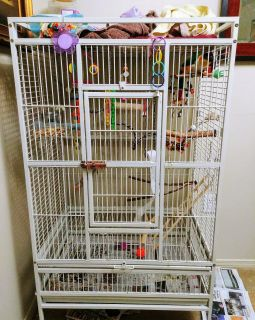 Caique parrot and cage