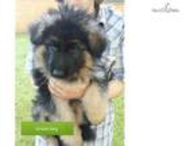 AKC Beautiful Green Puppy