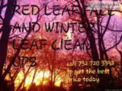 LEAF CLEAN UPS