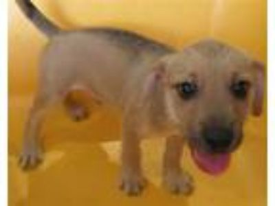 Adopt . a Terrier (Unknown Type, Medium) / Mixed dog in LAFAYETTE, LA (25917716)